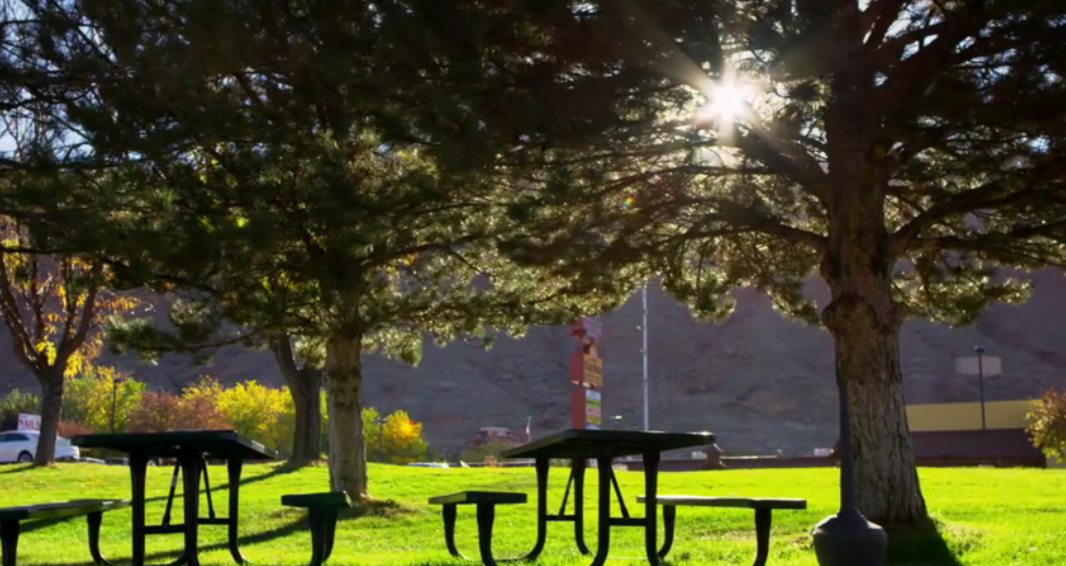 Beautiful park benches shaded from the sun by tall trees